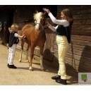 Rhinegold Childrens Classic Jodhpurs